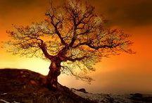 mon bel arbre