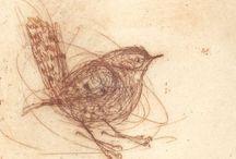 jus birds