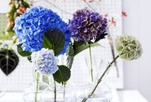 &HYDRANGEA / Add these blooms to your home interior today!