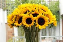 &SUNFLOWER / The perfect flower for summer!