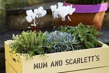 Love my containers / Whatever the size of your plot, adding a container will bring your plot to life.