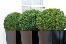 Love modern planters / Let's pair your plants with a modern plant for a up to date twist to your plot.