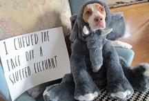 Dog Shame! / Pin your favorite dog shaming photo!