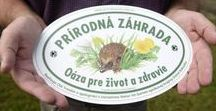 prírodná záhrada / NATURAL GARDEN / Aiming to create natural garden around our house. Learning how to fulfill the criteria of NO pesticides, NO easily soluble mineral fertilizers and NO use of peat or peat substrate. #NATURALgarden3H2O  FEATURING: #WILDgrowingHEDGE #meadow #WILDcrops #SPECIALstalls #LEAFwood #FLOWERSandPERENNIALS #compost #SHELTERSforANNIMALS #RAINWATERutilization, Use of nature-friendly methods and materials, #MULCH #HERBSandVEGETABLEbeds #ORCHARDandBERRYbushes #MIXEDcultureANDcropROTATIONS #greenMANURE