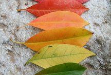 Leaf / http://naturalknit-ecru.com