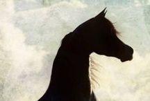 Amazing Arabians