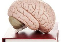 Narrative / Neuroscience and narrative, writing and the brain, making sense of the world