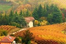 Fall in Tuscany / The Tuscan landscape colours yellow and brown, the vines turn, and our plates become laden with seasonal dishes using pumpkin, chestnuts and other comforting goodies. What better time to visit Dievole, go for a walk on our Natural Path or relax and read a book with a great view. Book it at www.dievole.com / by Dievole
