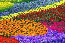 Multi-Color Flower Garden