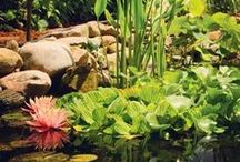Water Gardening / Gardening is not just limited to the ground and dirt anymore! Create your own little backyard oasis with a water garden! Fill it with water lilies and fish to enjoy all summer long.