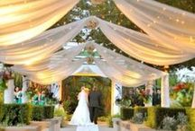 Wedding Ideas? :)  / by Taralynn Moline