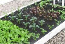 Gardening - Gärtnern / Gardening, beds, vegetables