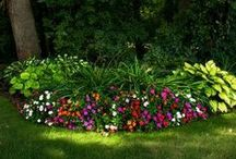 gardening Plants Crafts Ect / My perfect lawn for central west Florida.