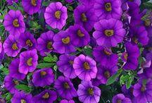 Purple Flower Garden / Surround your water feature with a beautiful flower garden.