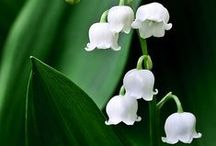 White Flower Garden / Surround your pond or water feature with a lovely array of white flowers.