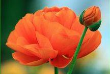 Orange Flower Garden