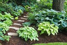 Greenery for your Garden Area