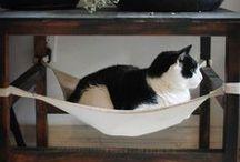 Felinas / Coisas para gatas