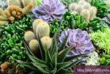 Drought Tolerant Yards  & Landscaping