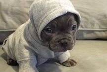 I ♥ Love ♥ Pugs / Here you will find Cute Pug Pics, Pug Rescue, Pug Quotes, Pug Puppies, Funny Pugs * Pug TShirts & Hoodies, Color Changing Coffee Mugs, Tote Bags, Yoga Mats, Mouse Pads, Pug Necklaces. Pug Mom Shirts >>> Collection>>> https://www.calikays.com/collections/Pugs