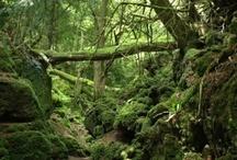 Natura / Imágenes de paisajes y entornos naturales.