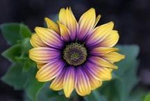 Flora / Imágenes de especies vegetales de todo el mundo