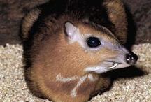 Mamíferos / Imágenes de mamíferos silvestres