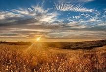 Llanuras y Praderas / Imágenes de llanuras y praderas de cereales, herbáceas y flores