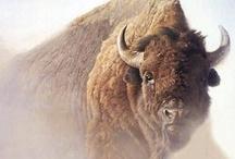 Búfalos y Bisontes
