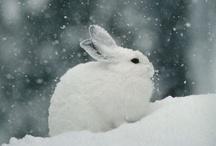 Conejos y Liebres / Fotografías de conejos y liebres. No hay escenas de caza ni depredación, así como tampoco imágenes de producción animal ni maltrato.