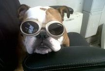 Awesome pics shared by our clients of their furbabies! / Dedicated to the amazing pets and owners that support us