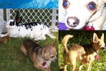 My Pets and Anipals