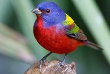Rainbow Animals & More
