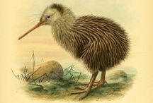 Scientific Illustrations / Detailed drawings and illustrations zoological and botanical.