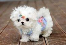 Cute Little