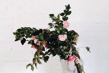 bloom & grow. / by ffion mckeown