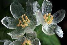 Bethsabée's Flowers / by Brigitte Vandenhove