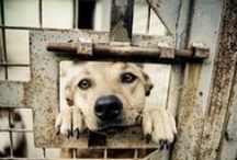ANIMAL PETITIONS ONLY / NO ADOPTIONS! Take action! SIGN & SHARE PETITIONS!