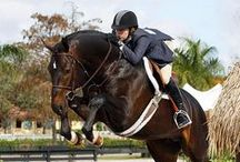 Show Hunters - All Things Equestrian