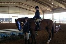 Double Jeopardy / Dedicated to my new partner in the hunter and equitation rings, Double Jeopardy (Monte).