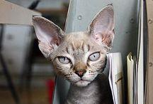 Cats ^..^ / Cats / by V⭕️❎ Caroline Rousseaux