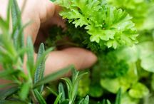 Green / All about gardening, DIY & plants. / by Aunty Betty