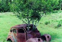 Rivincita. / La natura si riprende ciò che le apparteneva.