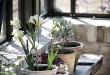 Jardins e Plantas