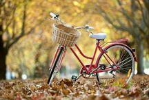 Bikes / by Gwen Page