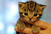 Adorable animals *.*