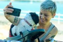 Girls, Dogs and their Bikes / What life is like trying to get your pooch from A to B  on a bicycle without a Buddyrider. If you want to make your pooches' life easier go to http://www.buddyriderdownunder.com