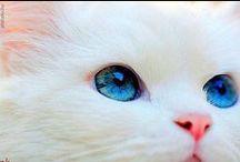 White cat-fehér cica