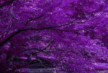All things purple <3 / by Valerie Selph