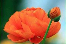 Flower power / Photography art flowers